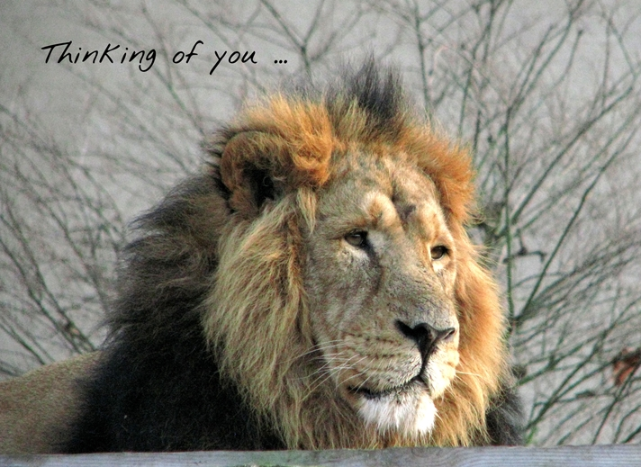 Debbie Daylights Thinking of you ... lion  personalised online greeting card