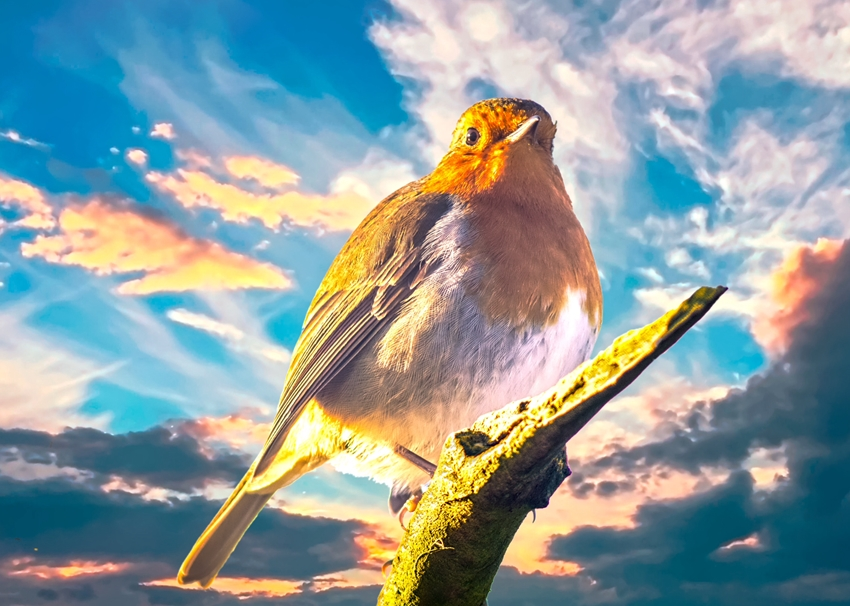 O Scrimshaw Photography Robin at sunset  personalised online greeting card