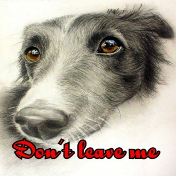 Animal welfare auctions Don't leave me  personalised online greeting card