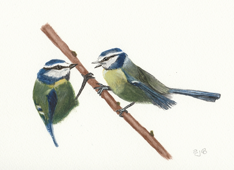 SJB Cards Blue Tits  personalised online greeting card