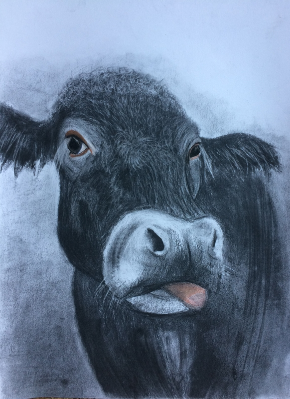 Ruth Searle Art & Photography Black bull  personalised online greeting card