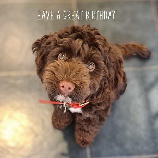 Snappy Designz Dog Birthday Card  personalised online greeting card