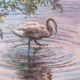 Art swan, water, ripples, sunlight, reflection, blue, pink, white, green, leaves personalised online greeting card