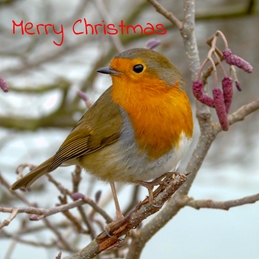 Christmas photography Christmas, Robin, bird, redbreast, nature, wildlife, photo, birds personalised online greeting card