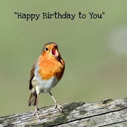 Birthday Robin Singing personalised online greeting card