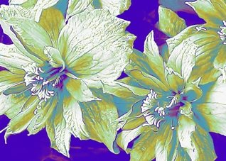 pop art white pale purple flowers  abstract green thankful grateful quiet warm  personalised online greeting card