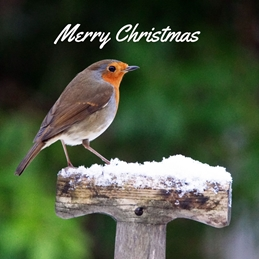 Gary Green Eyes Robin on snowy spade Christmas Robin Christmas snow personalised online greeting card