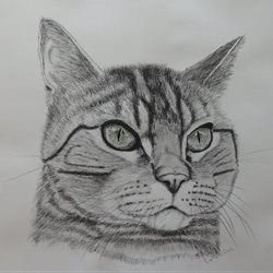 General cats, tabby personalised online greeting card