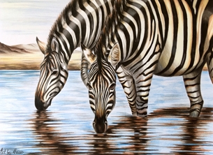 Art By Three  Zebras Zebras nature animals wildlife stripes black white water personalised online greeting card