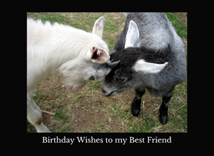 Birthday best friends friendly kids goats heads headbutting animals farms for-her for-child for-him farmyards horns personalised online greeting card