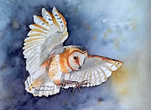 EmilyJane Barn Owl General photography owl bird wildlife blue yellow white for-him for-her personalised online greeting card