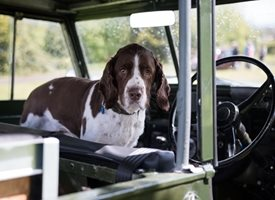 General Spaniel SARR rescue driving car cute dog personalised online greeting card