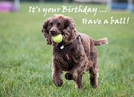 Birthday Spaniel Dog Cute SARR personalised online greeting card