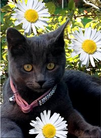 Quirkytags... DAISY CAT  Photography  CUTE ANIMAL FLOWERS CATS KITTENS  z%a personalised online greeting card