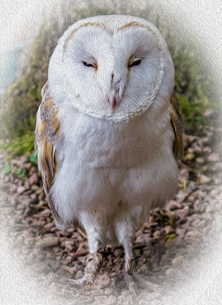 General photography for-him, for-her, General  animals, bird, owl, farm,  personalised online greeting card