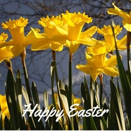 Gary Green Eyes Daffodils Happy Easter easter Daffodils Flowers  Spring personalised online greeting card