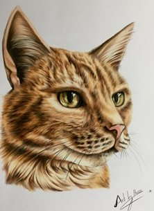 Art By Three  Ginger Cat art Cats ginger animals  for-him for-her eyes orange pets pencils  general blank all occasions art him her  personalised online greeting card