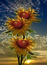 General Happy, sunflowers, mesmerising, warmth, sunset, breath taking, peaceful.  personalised online greeting card