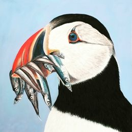 Art Puffin fish birds personalised online greeting card