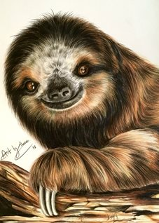 art sloths animals wildlife  cute smiles zoos her him mum dads kids all occasions for-him for-her for-child personalised online greeting card