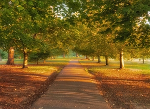 Photography autumn trees path Greenwich Park Royal London photography peaceful pathway personalised online greeting card
