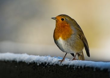 photography christmas Robin, Snow, Christmas, wildlife, bird personalised online greeting card