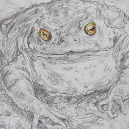 Little Liz Happy Art Toad with golden eyes Art general toad, eyes, for-him, for-her, for-children personalised online greeting card
