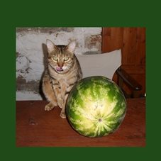 photography cats pets watermelon fruit personalised online greeting card