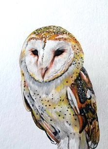art artwork owl birds wildlife for-her for-him personalised online greeting card