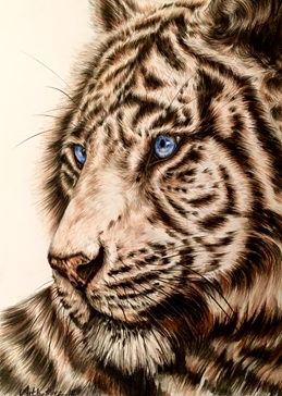 "art White Tiger animals big cats wildlife zoo nature white black stripes ""him"" ""her"" ""Child"" for-kids for-her for-him personalised online greeting card"