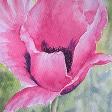 art Poppy, Pink, Flowers, Wildflowers, Countryside, Meadow personalised online greeting card