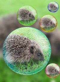 General hedgehog  animals z%a personalised online greeting card