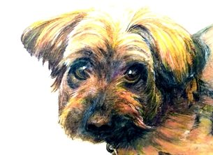 art artwork dog animals pets for-him for-her personalised online greeting card