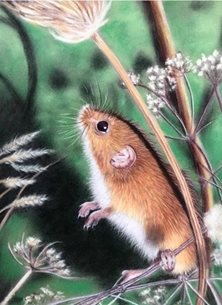Art field mouse wildlife animal nature personalised online greeting card