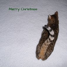 Christmas cats snow  winter personalised online greeting card