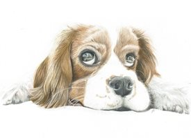 General  king charles spaniel, cavalier,  animal  personalised online greeting card