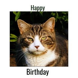 birthday Cat Tabby personalised online greeting card