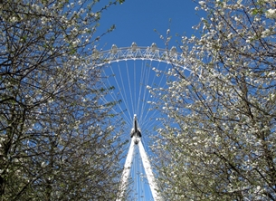 Photography London eyes tourists attractions blossoms spring trees wheels for-her for-him personalised online greeting card