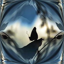 Photography butterfly silhouette transformation nature general birthday butterflies insects  personalised online greeting card