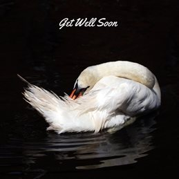 get well Swan personalised online greeting card