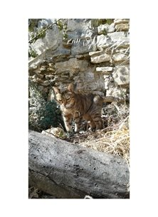 photography old cats pets disguise  personalised online greeting card
