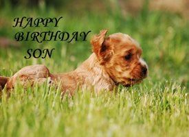 Birthday  Son Cute Dog Puppy Spaniel personalised online greeting card