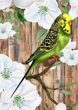 general GENERAL BUDGIE bird  personalised online greeting card