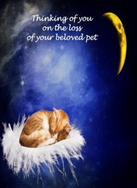 Sympathy Cat Feather Cloud Moon Sad pet animals z%a personalised online greeting card