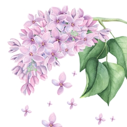 General Lilac, Pink, Any Occasion, Notelet, For-Her, For-Him, Floral personalised online greeting card