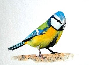 EmilyJane Blue Tit art birds wildlife blue yellow green   mum dad son daughter Nan granddad friend aunt uncle personalised online greeting card