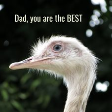 fathers dad  rhea birds animals birthday dad personalised online greeting card