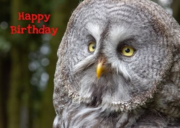 Birthday Birthday, Grey Owl, bird, nature, wildlife, birds, photography , bird, owl, eye, feather, animal, nature, beak, portrait, looking, cute, falconry, zoo, animal wildlife, bird of prey, animal themes personalised online greeting card