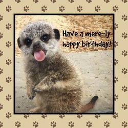 Birthday Meerkat  celebrate fun happy cute animals funny tongue cheeky  personalised online greeting card