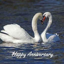 Gary Green Eyes Swan Anniversary  Anniversary Swans photography personalised online greeting card